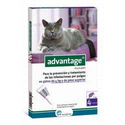 Advantage 4 pipetas para Gatos de más de 4kg