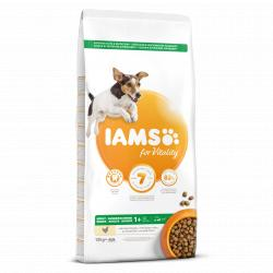 Iams Pienso Senior & Mature Pro Active Pollo 12kg