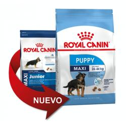 PACK AHORRO Royal Canin Maxi Junior 2 x 15kg