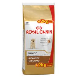 Royal Canin Labrador Retriever Junior 12 + 2kg
