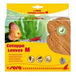 Sera Catappa Leaves M 18cm 10uds