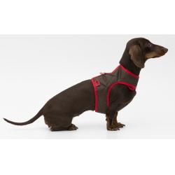 tQel Dog Trends Arnés Acolchado Impermeable Chocolate Talla S